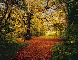 Fotomural Bosque de otoño