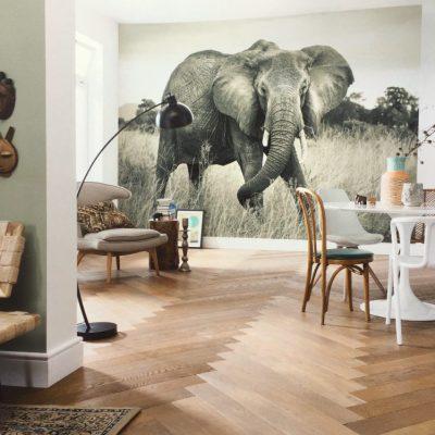Fotomural Komar Elefante