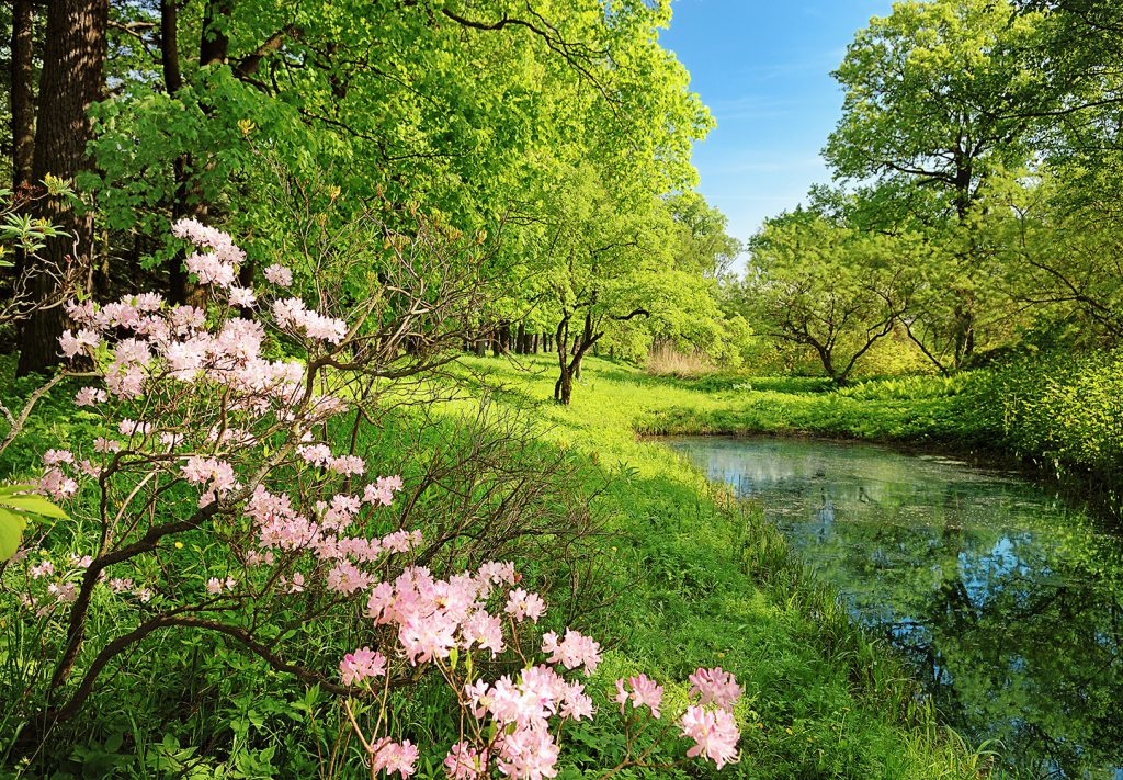 00136_Park_in_the_Spring