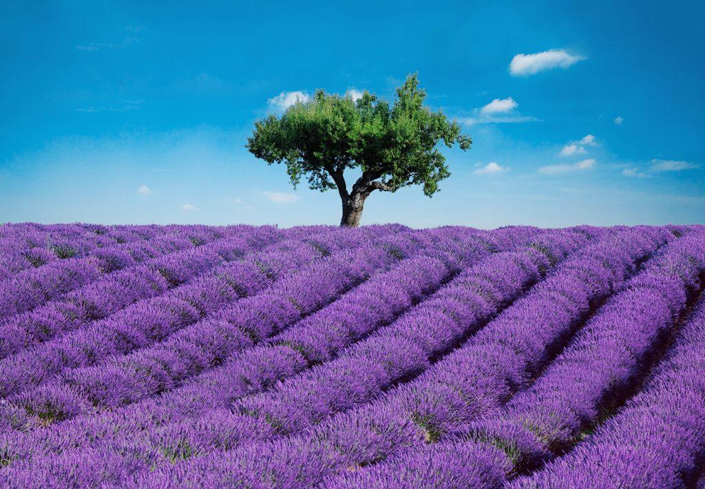 00144_Provence