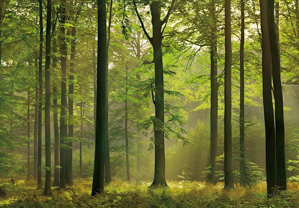 00216_Autumn_Forest