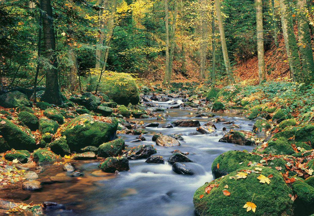 00278_Forest_Stream
