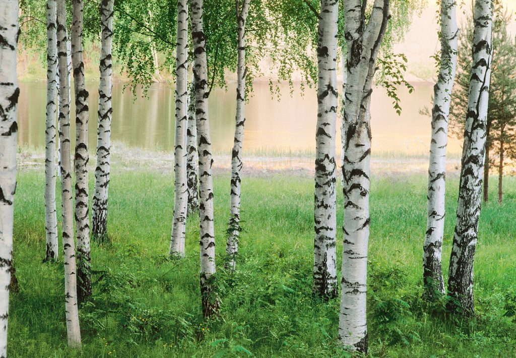 00290_Nordic_Forest
